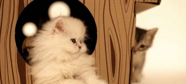 Kattenhuis Loyal Luxe