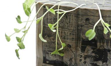 Groenten kweken uit een stripboek, letterlijk!
