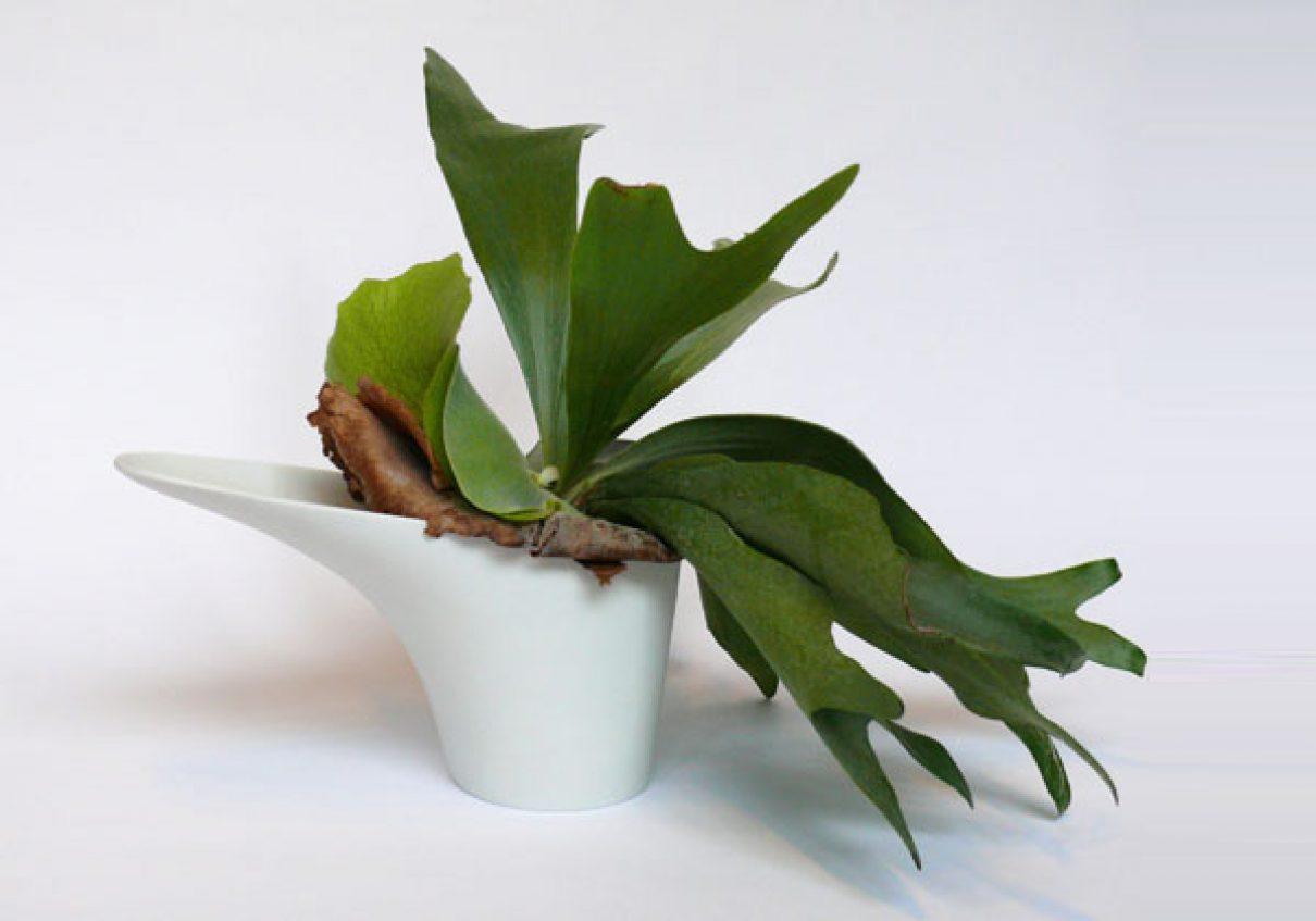 Potten voor moeilijke planten