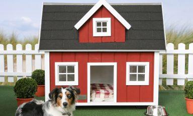 Designhuizen voor je hond