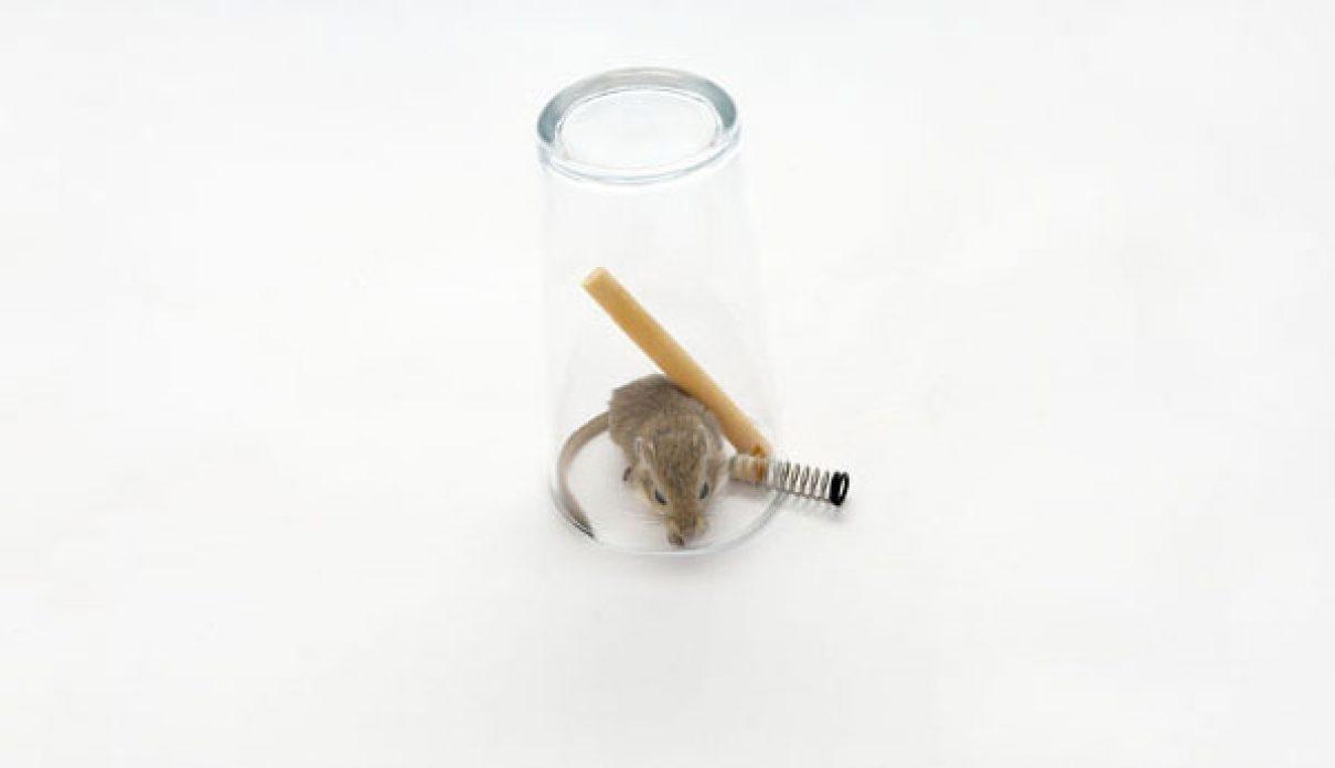 Muizenvallen en opstaan