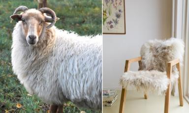 Een kudde stoelen van Melle Koot