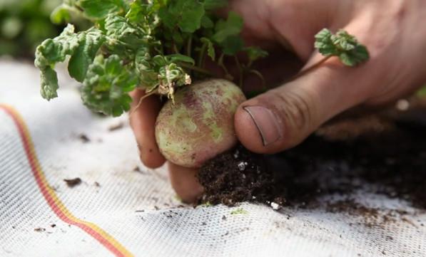 Biologische kruiden groente eigen tuintje Gimmii
