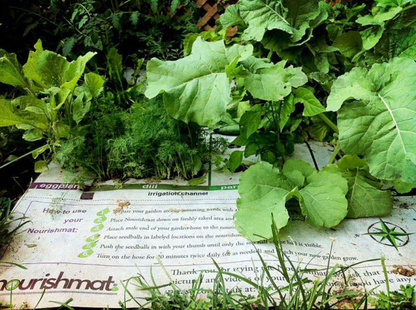 Simpele groentetuin kleine ruimte