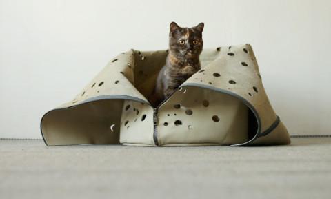 TRAVELING-CAT-Studio Snorhaar