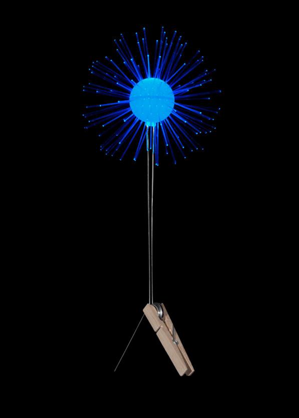 Lichtbloem blauw van Coens
