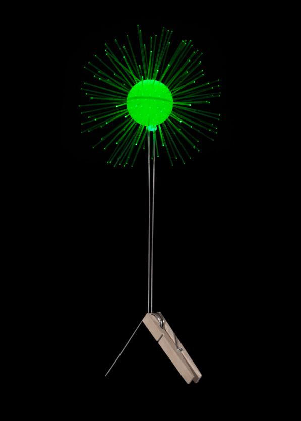 Lichtbloem groen van Coens