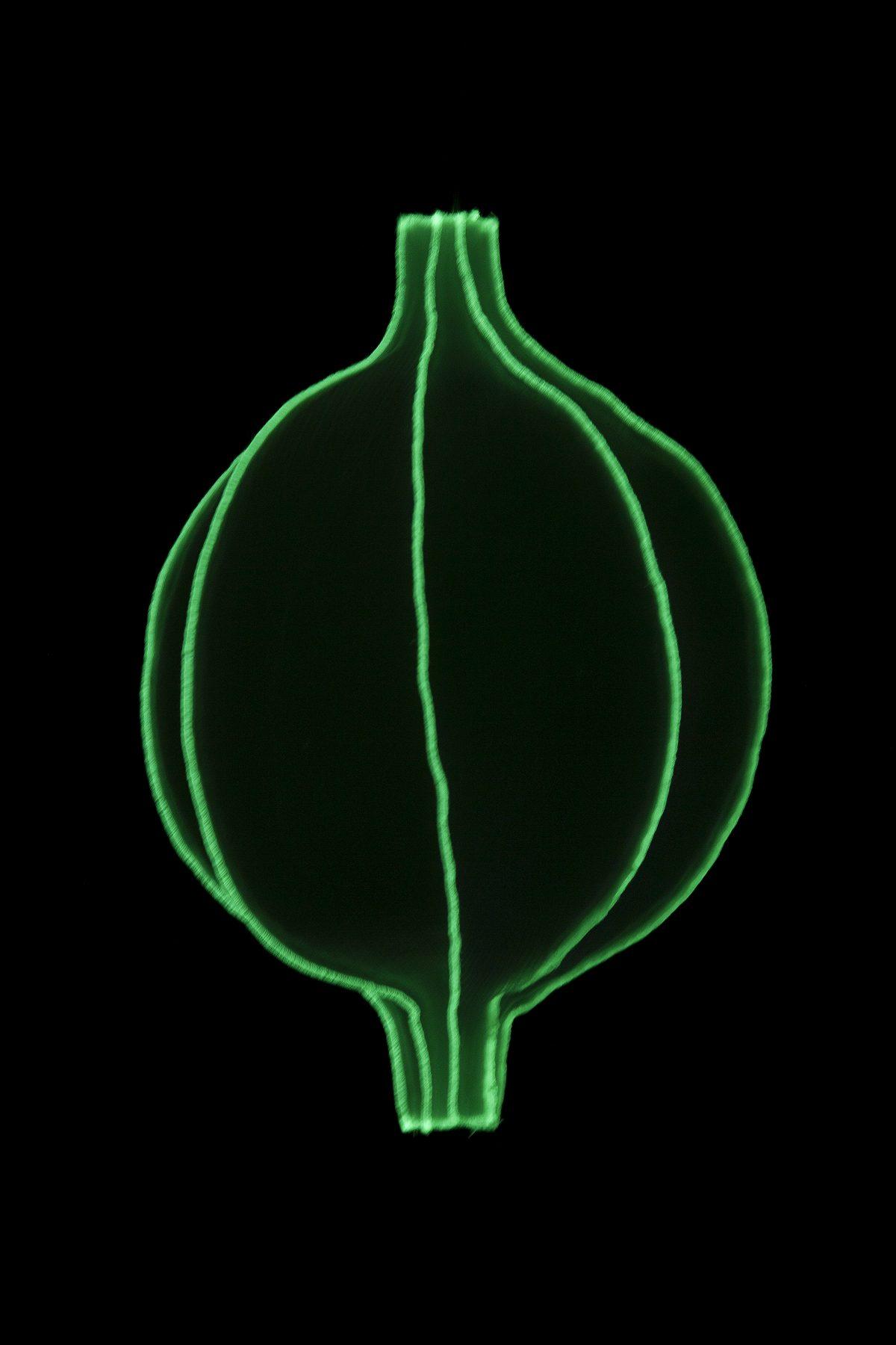 Radiolaria Discomedusa Infans glow-in-the-dark hanglamp van Bernotat