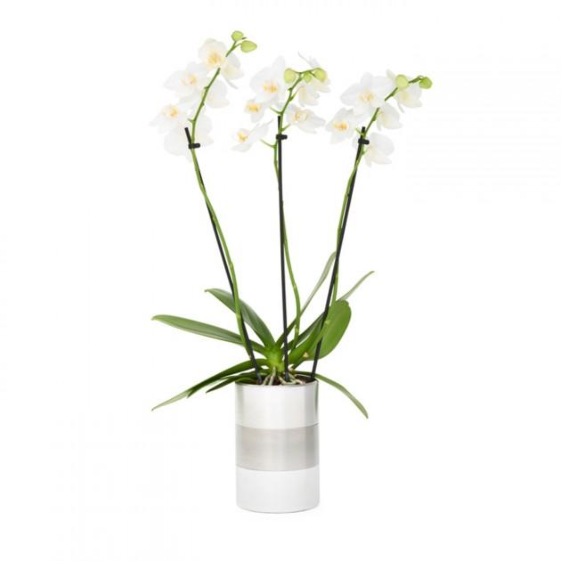 aluminiumpot-orchidee