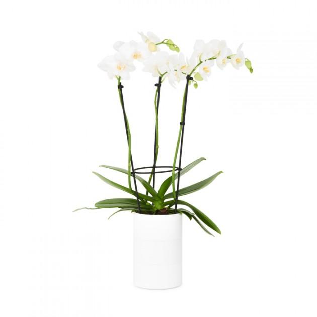 plastic-pot-orchid
