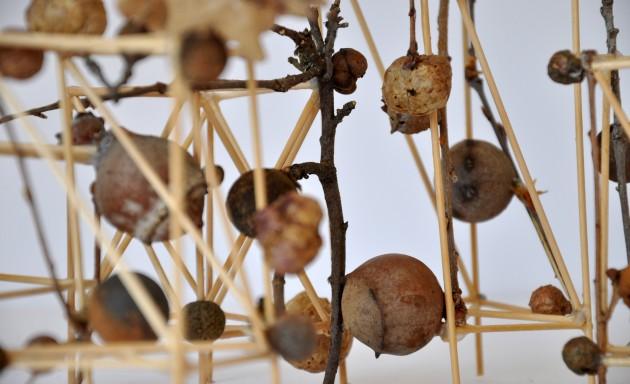 Giulia Berra, Città di galle, legno, colla, rametti di quercia, dimensioni variabili, 2011, dett