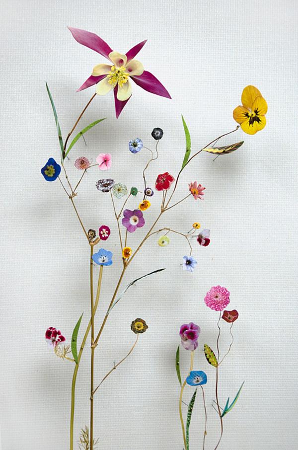 161-flower_construction_#55_02 Anne ten Donkelaar