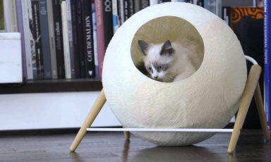 Meyou Paris; geluk voor kat én baasje