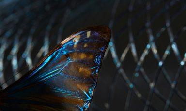Atelier Robotiq's lampen geinspireerd op libellenvleugels