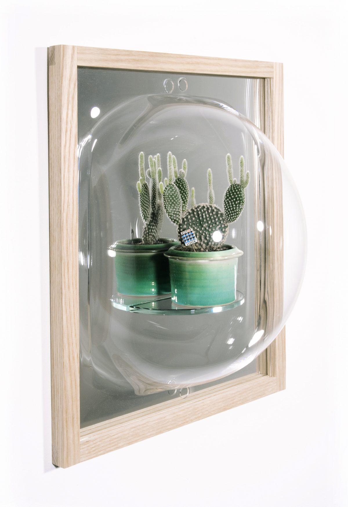 CuratorCabinet-showcase_mirror-cactus-Studio_Thier&vanDaalen1