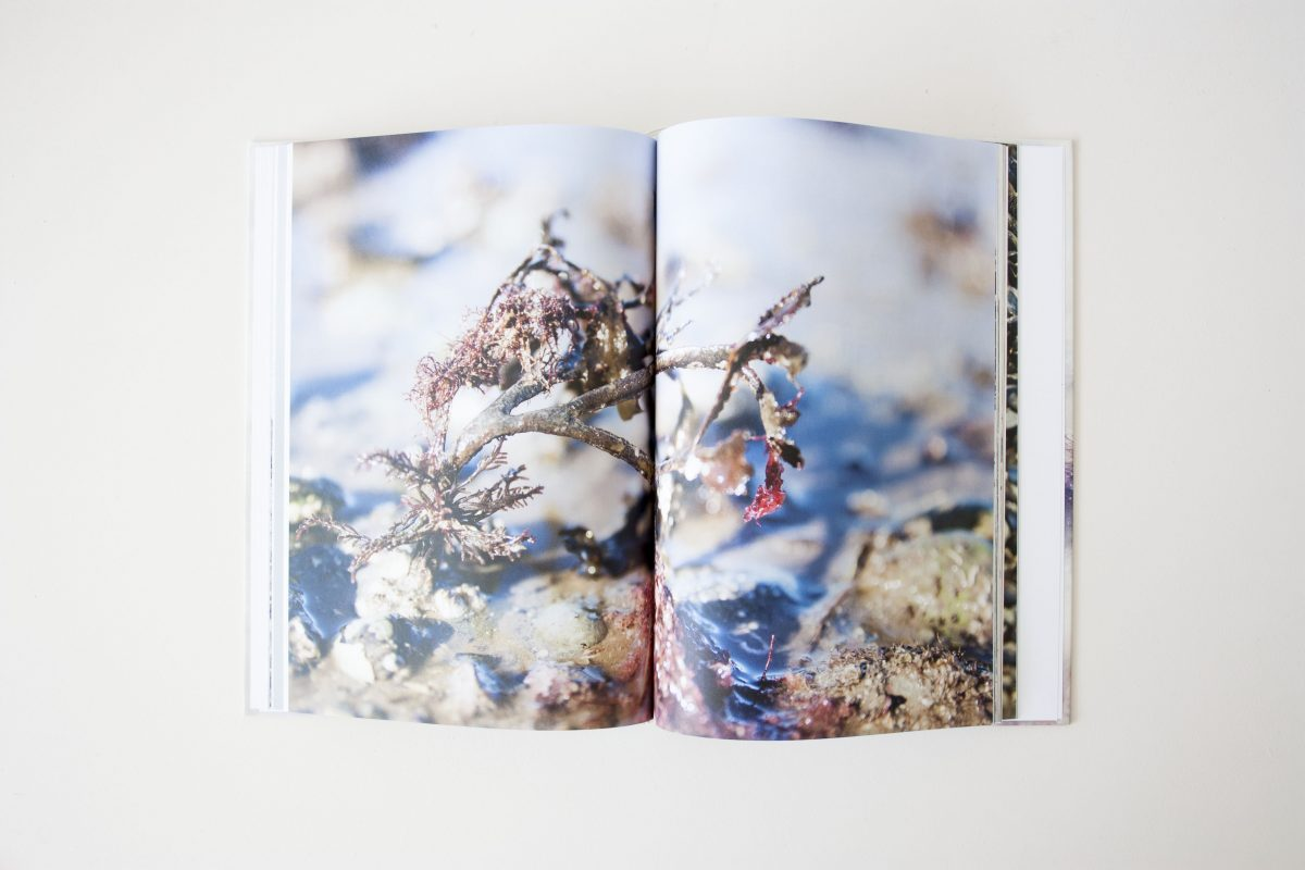 Book Seaweed Research Nienkehoogvliet Zeewier Boek Gimmiishop