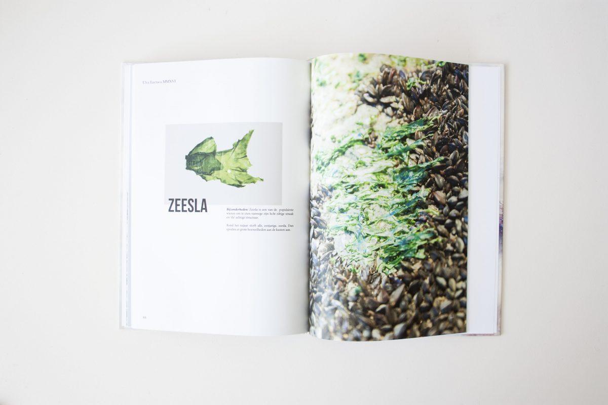Nienkehoogvliet Seaweed Research Book Zeewier Onderzoek Boek Gimmiishop