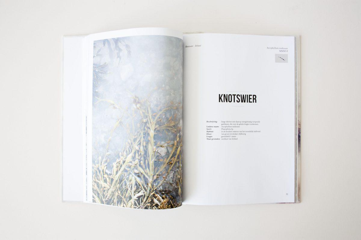 Seaweed Research Book Nienkehoogvliet Boek Zeewier Gimmii
