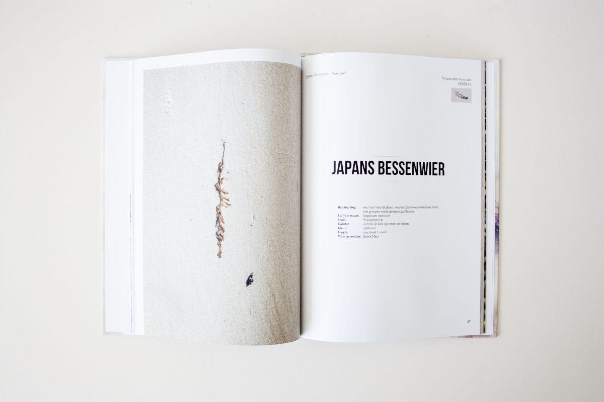 Seaweed Research Book Nienkehoogvliet Gimmii