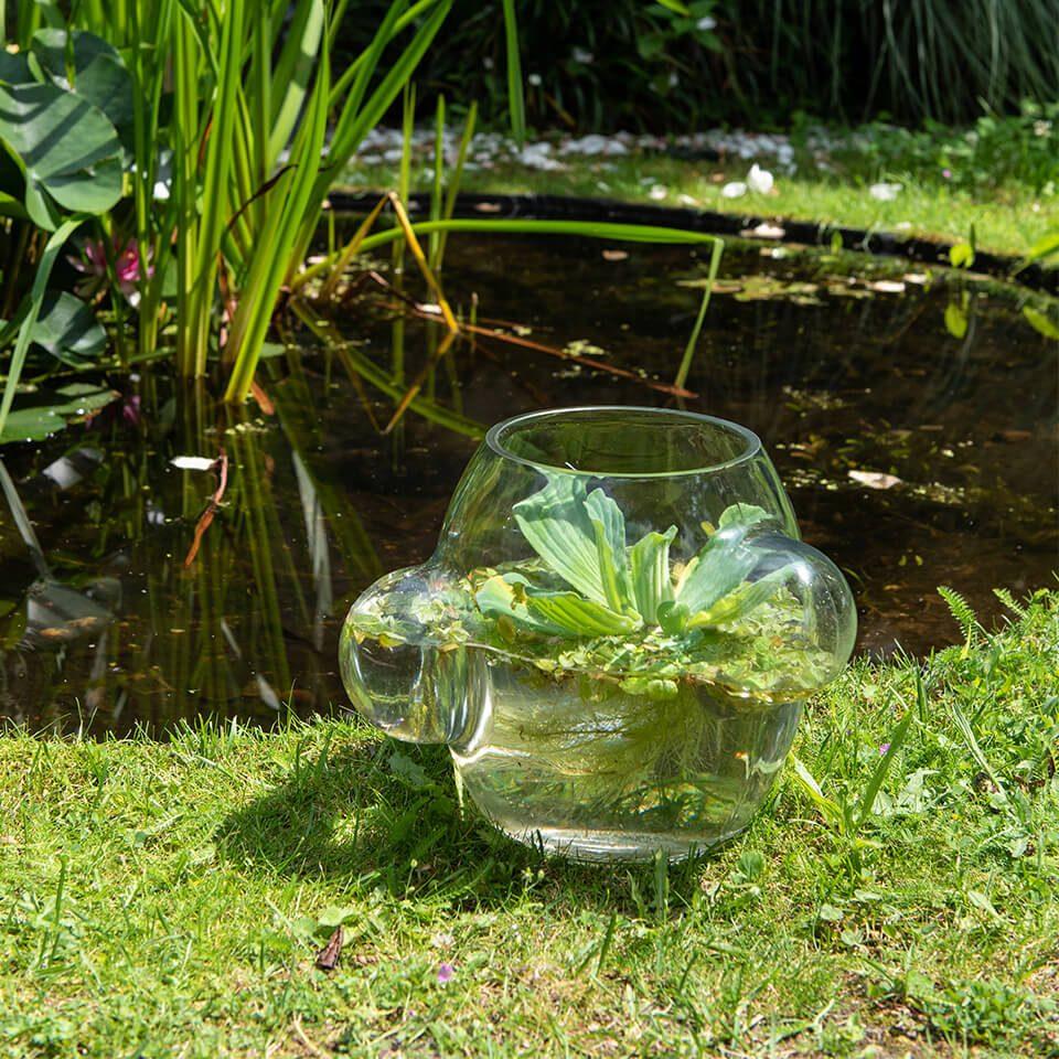 Local Habitat Water Pond