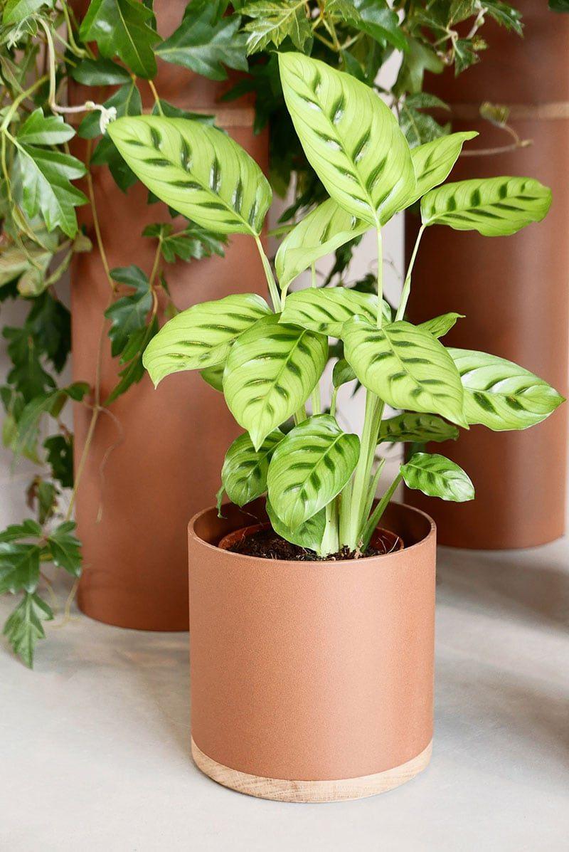 Set Terracotta Vij5 Plantenbak Dutch Design