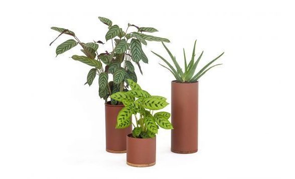Plant Collector (Set)