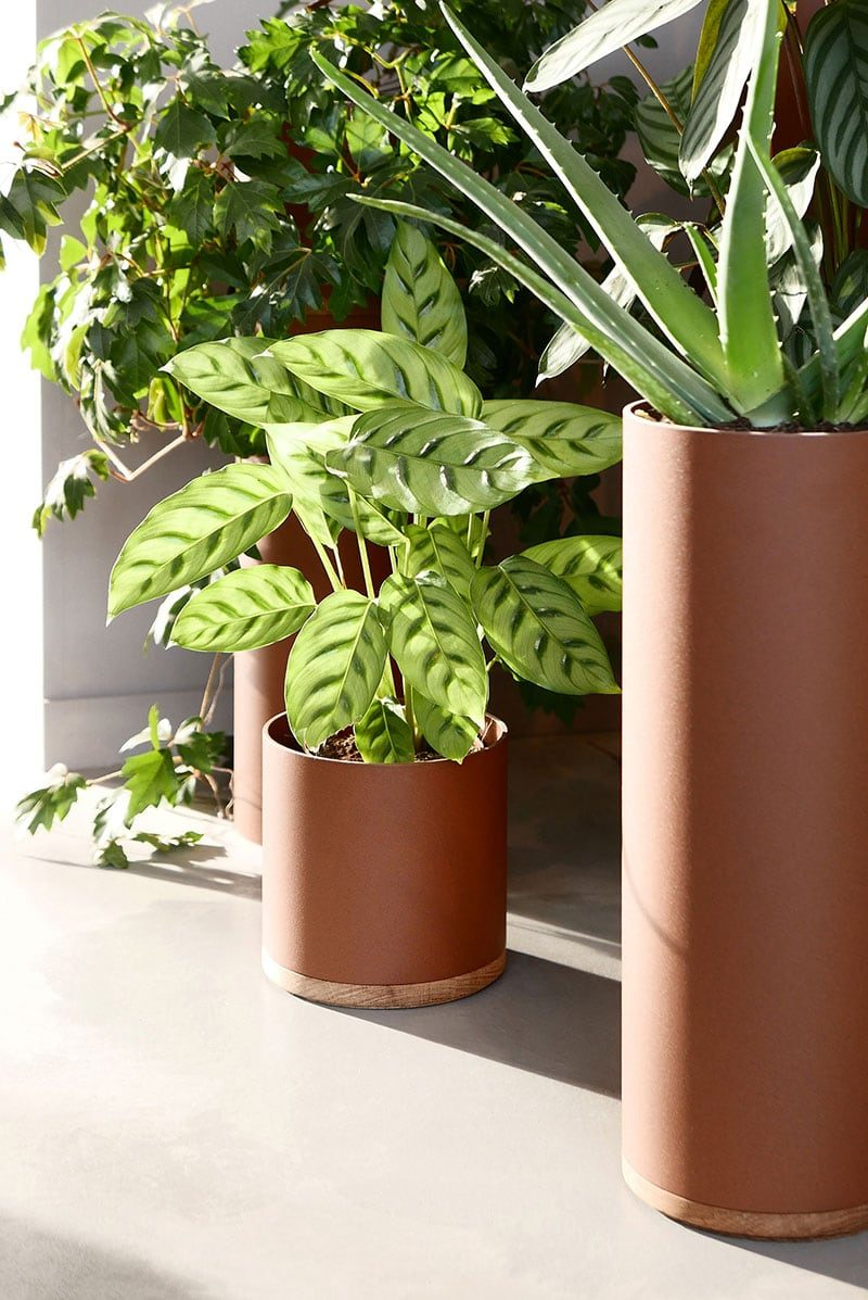 Vij5 Plantenbak Plantcollector Dutch Design Roest Combineren Terracotta